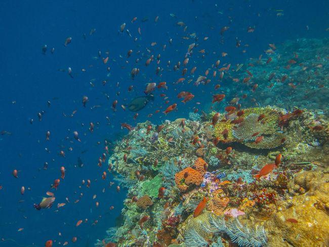 Diving SCUBA Scuba Diving Underwater Underwater Photography Fish Reef Komodo Batu Bolong Batubolong INDONESIA Flores Wildlife Wildlife & Nature Nature Vitaminsea