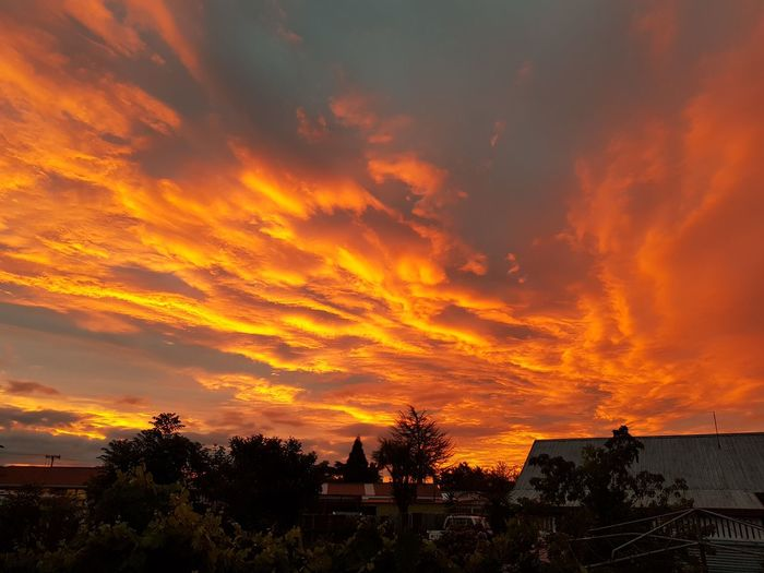 Sunset yesterday evening. It was a stunner. Opotiki Asis NoEditNoFilter Sunset Tree Dramatic Sky Silhouette Cloud - Sky Outdoors Sky Scenics Beauty In Nature