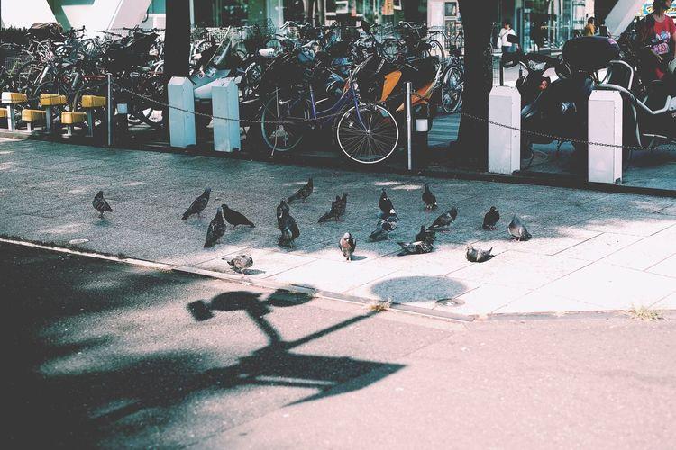 Birds perching on floor in city