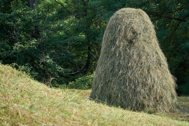 Hay bales on field in forest