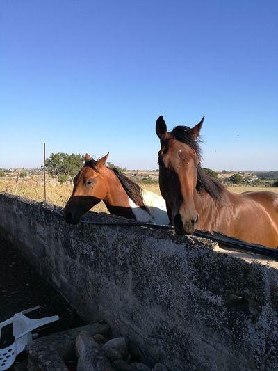 Horses Pets