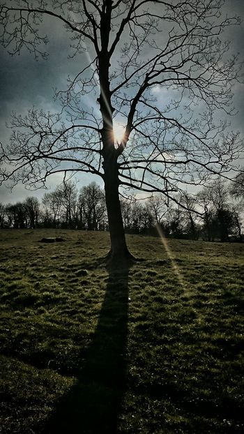 Tree Shadows Beauty In Nature EeYem Best Shots Nature The Greatest Artist Trees And Sky Branches Light - Natural Phenomenon Sunray Of Light Sunrays Darkness And Light Darkness Falls Tree Trunk Tree Silhouette Tree And Sky