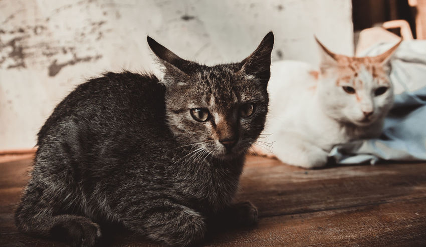 Cats Of EyeEm Cats 🐱 Winter Animal Themes Cat Cat Lovers Catsagram Catslife Cat♡ Close-up Day Domestic Animals Domestic Cat Indoors  Looking At Camera Mammal No People Pets Portrait Sitting