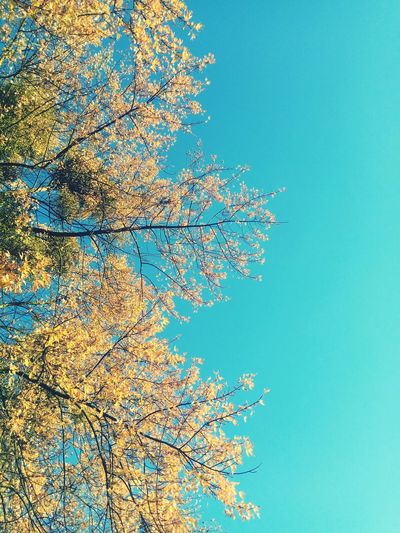Goldpolishautumn Clear Sky Pixelated Blue Colored Background Abstract Sky Close-up