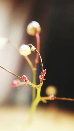Plants Flowers_collection Eyeem Plants Macro_collection Macro Macro Photography Macrophotography Plantas Plant Life Plants And Flowers Plants 🌱 Plant Macro Beauty