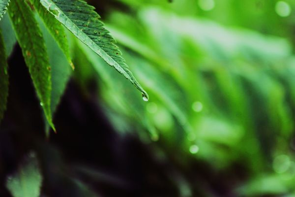 Leaf Green Color Nature Drop Freshness Water Plant Close-up No People Growth Beauty In Nature Fragility Defocused Green Color