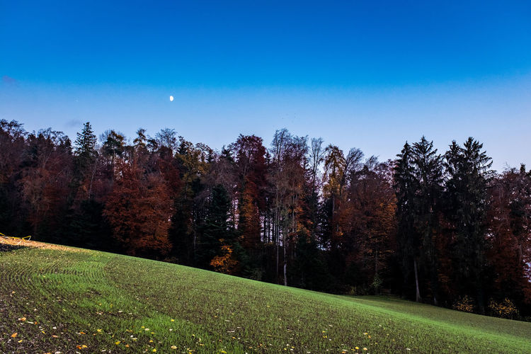 Plant Tree Beauty In Nature Sky Tranquility Tranquil Scene Growth Grass Scenics - Nature Land Green Color Nature Autumn No People Landscape Field Environment Idyllic Non-urban Scene Day Change Outdoors