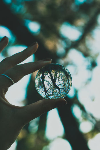 Close-up of hand holding glass with reflection of trees