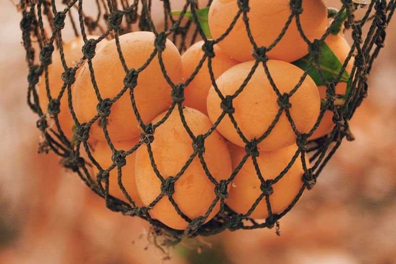 Thai Fruit Pattern Close-up Metal No People Nature Focus On Foreground Day Outdoors Sport Chainlink Fence Orange Color Fence Water Sunset Netting Hanging Chain Rope Land Decoration
