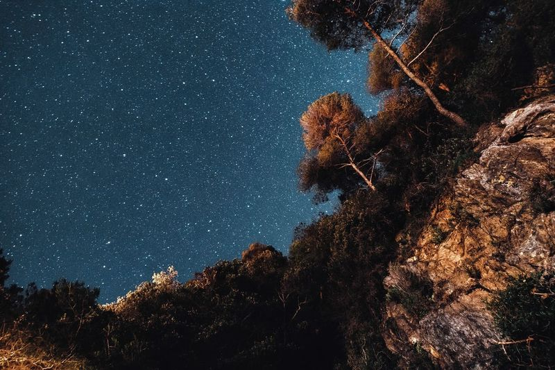 Star - Space Night Low Angle View Tree Astronomy Sky Plant Scenics - Nature Beauty In Nature Star Illuminated No People Outdoors Tranquility Space Galaxy Nature Star Field Milky Way Growth