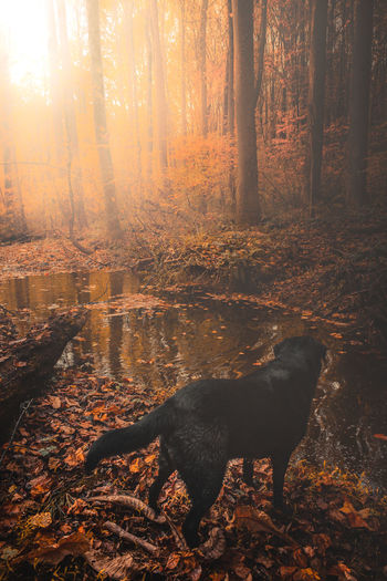 Dog in forest during autumn