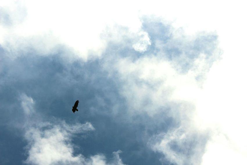 """Libre"" Low Angle View Cloud - Sky Bird Animals In The Wild Flying Day Animal Themes San Joaquín, Queretaro"