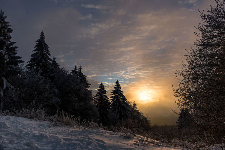 Hoher Meißner sunset Nordhessen Beauty In Nature Cold Temperature Day Hoher Meissner Landscape Nature No People Outdoors Scenics Sky Snow Sunset Tranquil Scene Tranquility Tree Winter