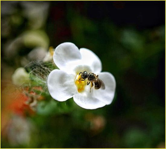 Bees And Flowers Bees Flower Wildlife Nature Flower Collection Macro Photography Natural Beauty Flowers,Plants & Garden Beauty In Nature Macro Nature Macro Beauty Insect Photography