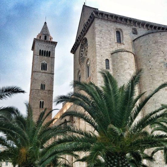 Bella Italia Exploring Puglia Palms