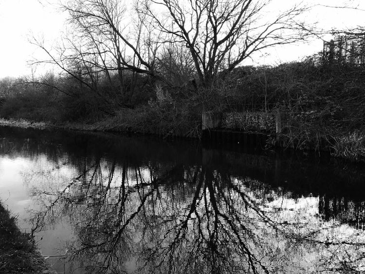 Canal Reflection Water Tree Nature Tranquility Outdoors Lake Bare Tree Sky No People Tranquil Scene Day Scenics Beauty In Nature Growth