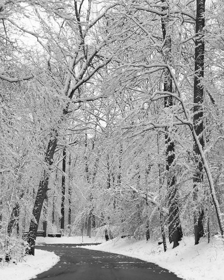 Snow Covered Beauty In Nature Cold Temperature Snow Bare Tree Forest Day Frozen Tranquil Scene Outdoors Tree Winter Tranquility White Color No People Covering Scenics - Nature