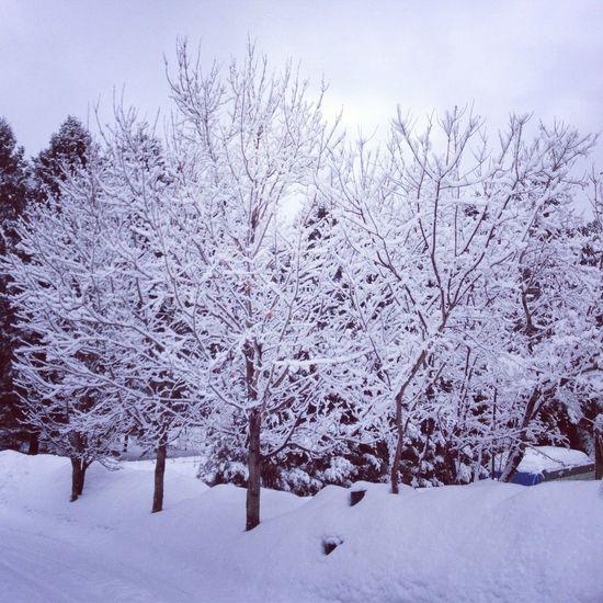 TreePorn Snowfall Nature_collection