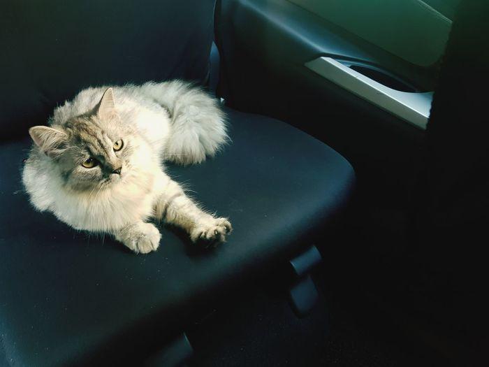 Pet cat while