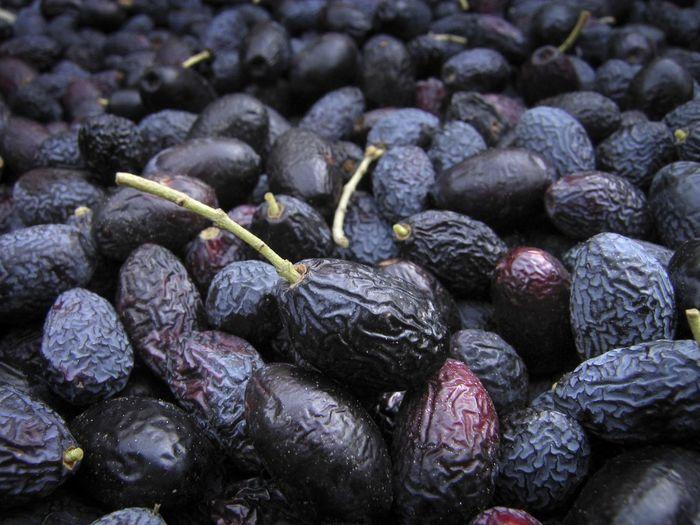 January olives,