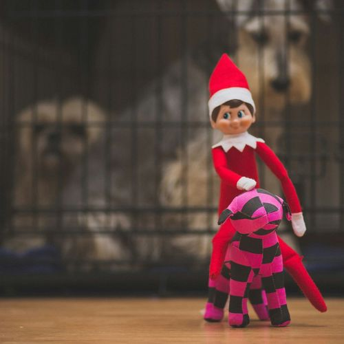 this Elf found my Victoria's Secret Dog and out Joy Riding