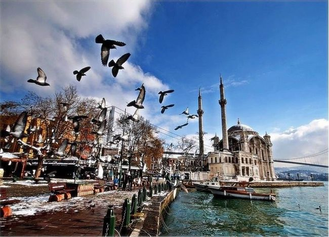 İstanbul ... Enjoying Life Seaguls mosque