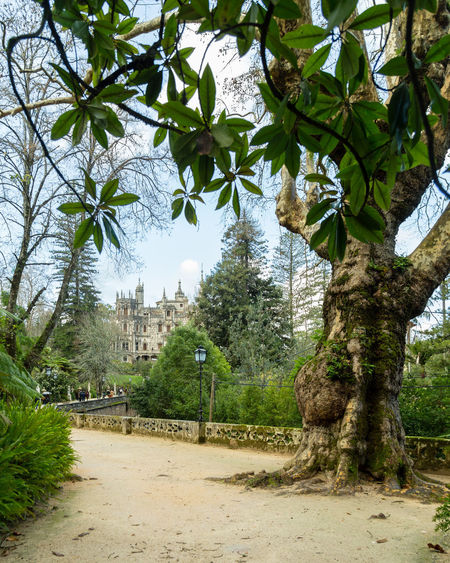 Quinta da Regaleira, Sintra Quinta Da Regaleira Sintra Architecture Beauty In Nature Building Exterior Day Growth Nature No People Outdoors Sky Tourism Destination Travel Destination Tree