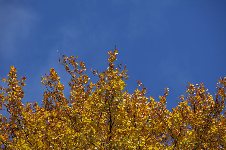 Low angle view of yellow flowers against blue sky