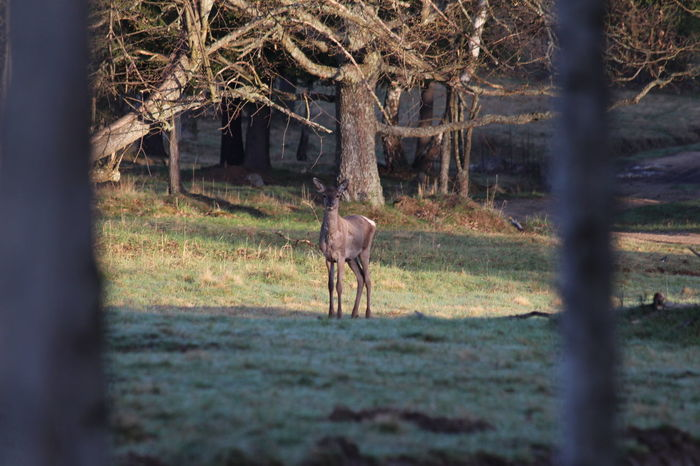 Animal Day Fawn Field Grass Grassy Landscape Mammal No People Outdoors Roé Selective Focus Spring