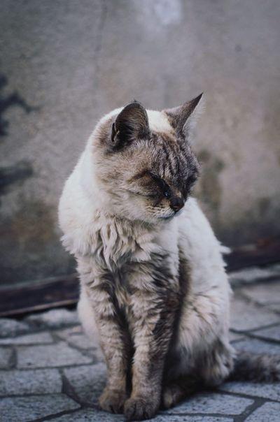 May 8, 2015 Hiroshima Cat Pentax