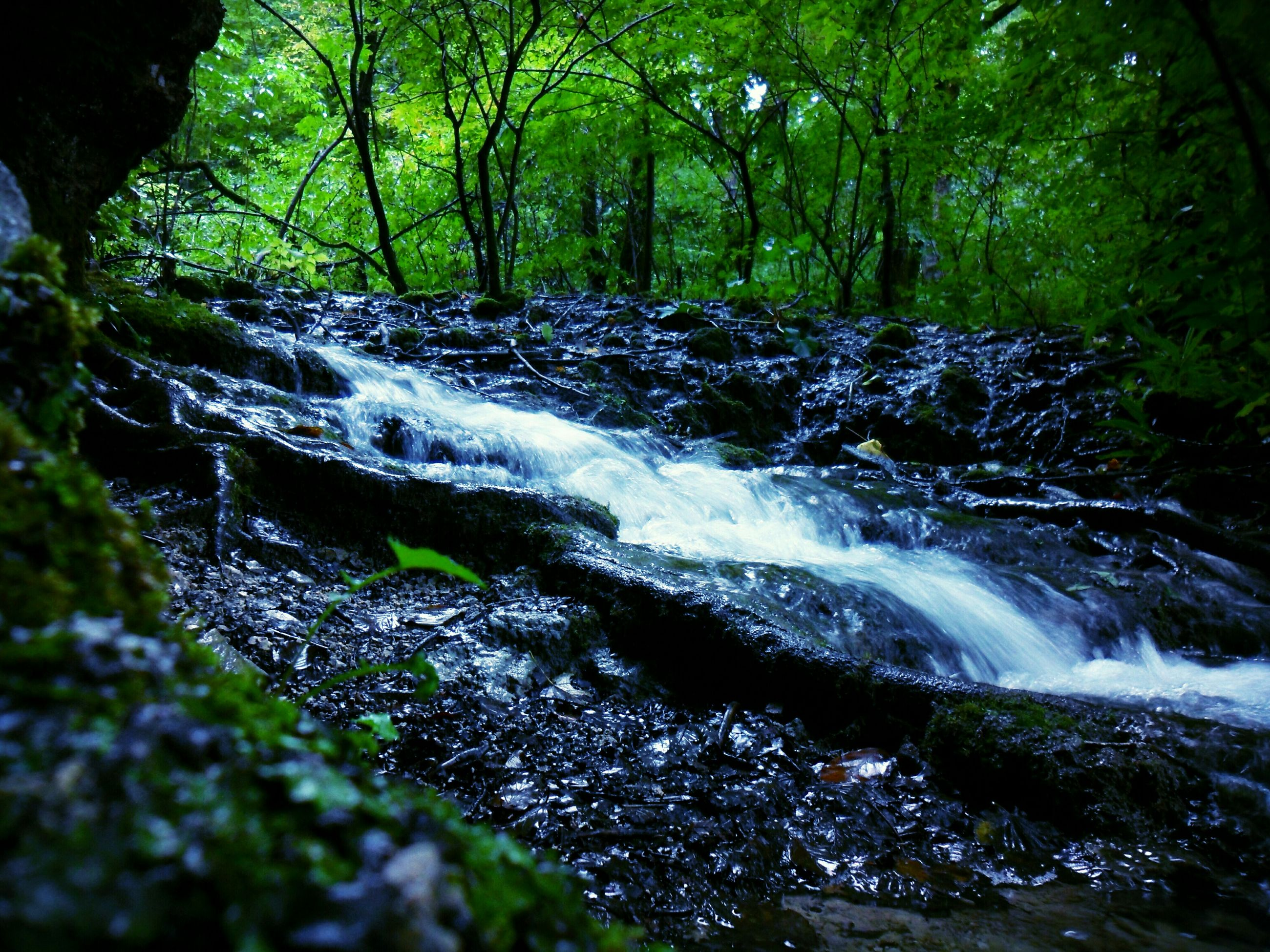 forest, tree, nature, beauty in nature, water, flowing water, growth, tranquility, flowing, scenics, waterfall, stream, motion, tranquil scene, woodland, green color, non-urban scene, outdoors, plant, idyllic