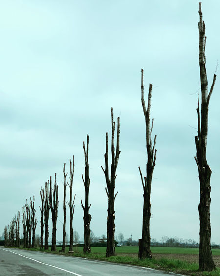 View of trees on road against sky