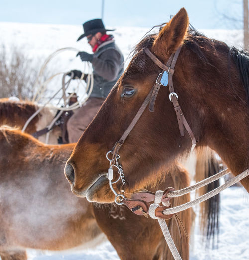 Feb 2019 - Music Meadows Ranch Colorado Winter Focus On Foreground Cowboy Lasso Ranch Life Breath Working Animals Horse Brown Day Outdoors Cold Temperature Group Of Animals Animal Themes Livestock Domestic Mammal Working Animal Herbivorous Animal Head  Domestic Animals Vertebrate Snow