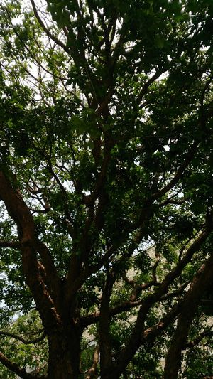 Tree Branch Forest Sky Green Color Plant Growing Woods Bark Tree Canopy  Tree Trunk Plant Bark
