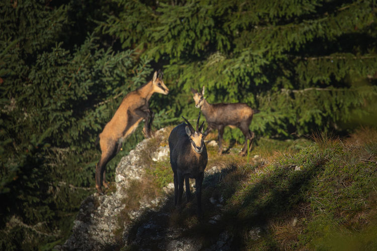 Horses standing in a forest
