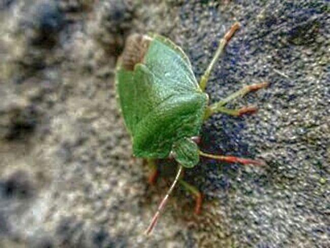 Piensa en verde.... Macroclique Macro_collection Streamzoofamily EyeEm Nature Lover Eyeem Fauna