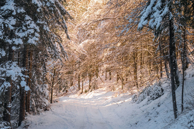 Light Slovenia Snowy Road Trees Beauty In Nature Cold Temperature Day Forest Landscape Nature No People Outdoors Scenics Sky Slovenija Snow Sun Sun Light Tranquil Scene Tranquility Tree Winter
