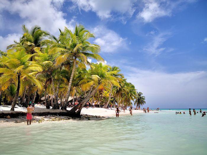 Carribean Tree Water Palm Tree Sea Beach Sand Blue Summer Tourist Resort Tropical Climate