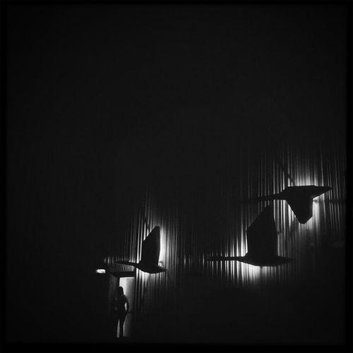 schnell noch mal Filmtheater Movietheater Moviehouse Germany Woki Cinema Filmhouse Bw Picturehouse Deutschland Wildgans Goose Graylag Kino Greylaggoose Bonn Jj_forum_0614 Jj  Sneakpreview Sneak Brant