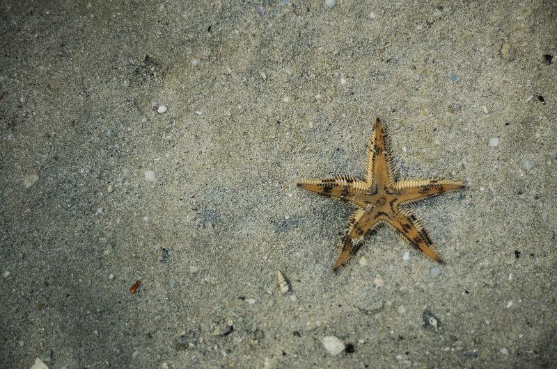 Beach Beach Day Beach Photography Beach Star Beach Walk Beachphotography Portrait Sand Sea Creatures Sea Star Seashore Star Star On Sand Starfish  Starfish At Beach Starfishes