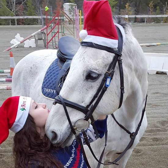 Merychristmas Christmashorse Perfect Love Perfects Conection Likeforalways Tagsforlikes Horsestagram Hipica Equestrianlife Equine Funnytimes Horseadict Instahorse Horsegirl Loveyou Horsefollowers Instaphoto