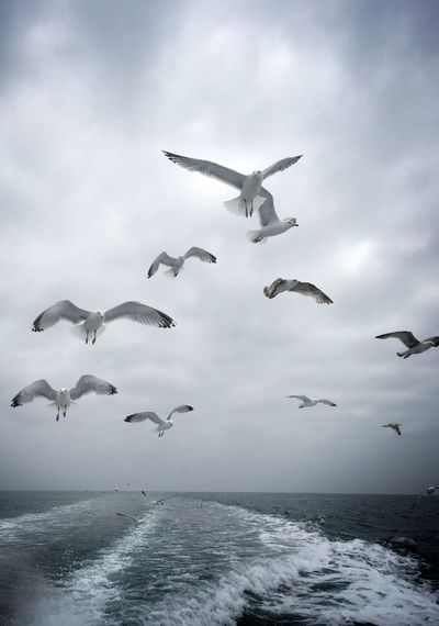 Animals In The Wild Flying Bird Animal Themes Sea Spread Wings Nature Water Animal Wildlife Mid-air No People Day Beauty In Nature Motion Large Group Of Animals Seagull Outdoors Flock Of Birds Sky Togetherness