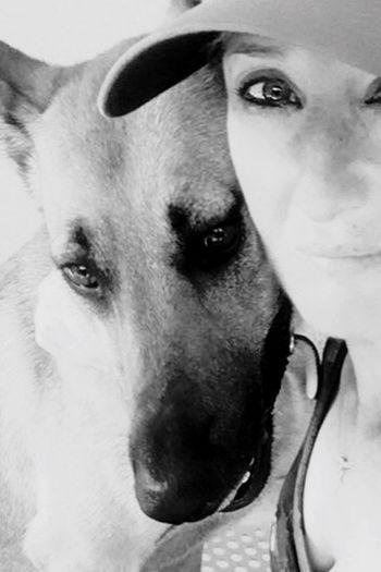 Dog Pets Domestic Animals Mammal Looking At Camera Portrait One Animal Animal Themes Sud De La France Garden Malinois Malinois Dog Malinoislovers Bestfriend Amitiée Close-up No People Day