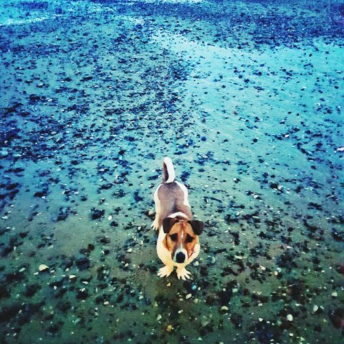 Dog Jack Russell Skippy Charlie Chaplin Water Sea Life High Angle View Sea Close-up EyeEmNewHere