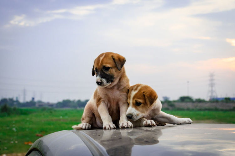 Puppies on car roof against sky