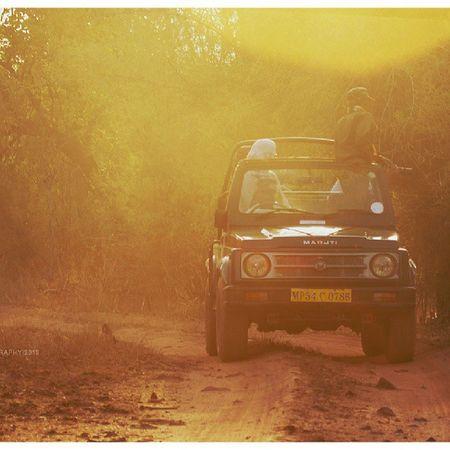 The reason I love morning safaris. ShounakNayakPhotography Bandhavgarh Nature Wildlife