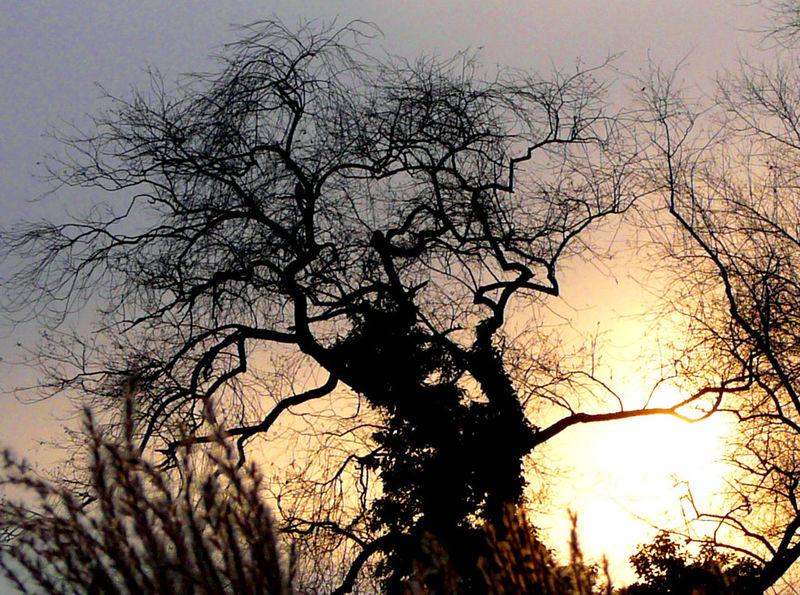 Tree Silhouette Winter Skye sun
