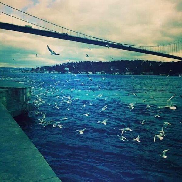 Istanbul #turkiye Istanbul - Bosphorus Sea Birds
