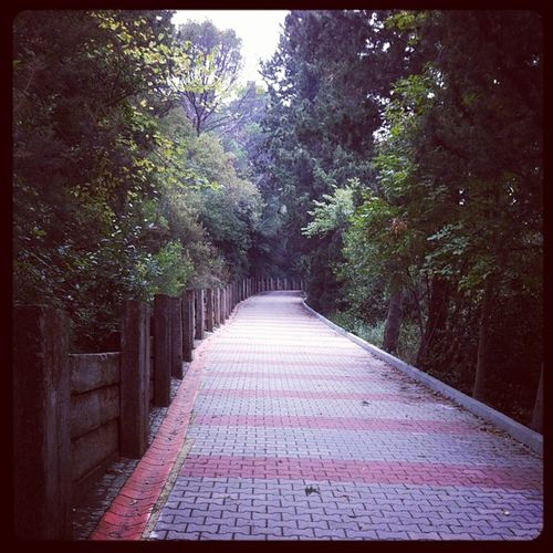 Istanbul Mihrabad Mihrabat Mihrabatkorusu koru park turkiye bosphorus bogaz bogazkoprusu bridge kopru manzara nature