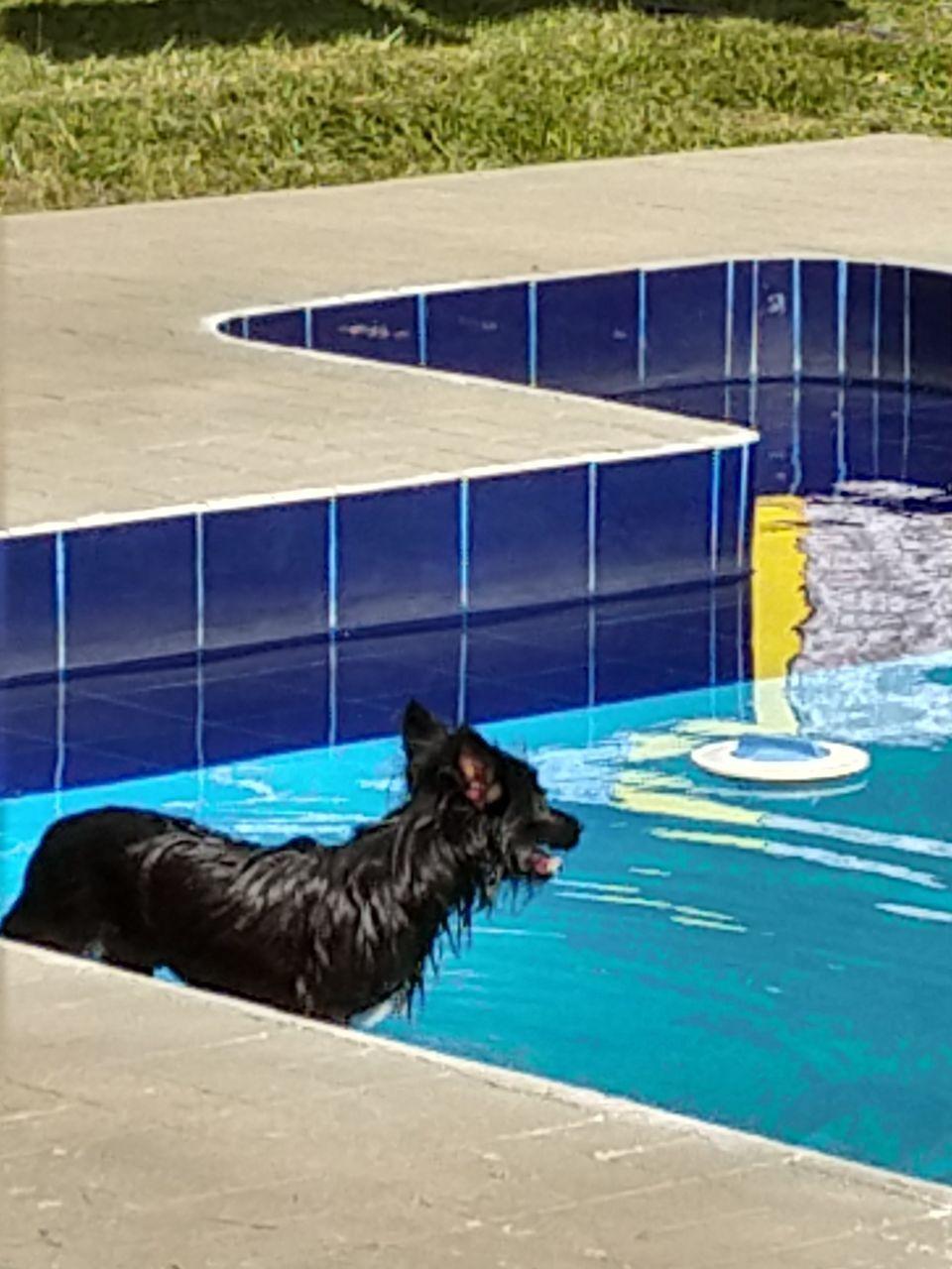 BLACK DOG IN SWIMMING POOL AT RESORT